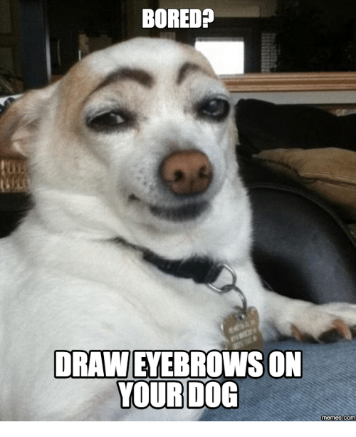 Bored Draw Eyewbrowas On Dogs Meme
