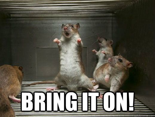 Bring It On! Rat Meme