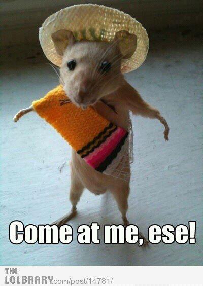 Come At Me Ese! Rat Meme