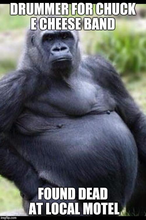 Drummer For Chuck E Gorilla Meme