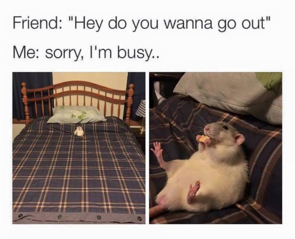 Friend Hey Do You Rat Meme