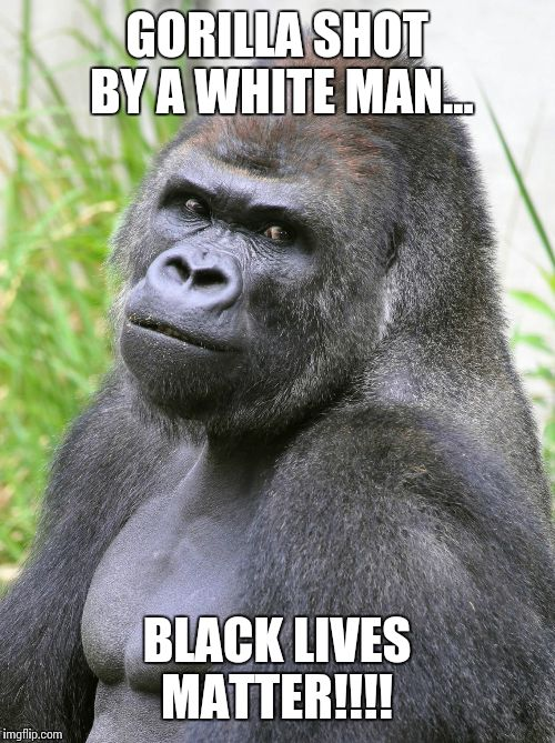 Gorilla Shot By A Gorilla Meme