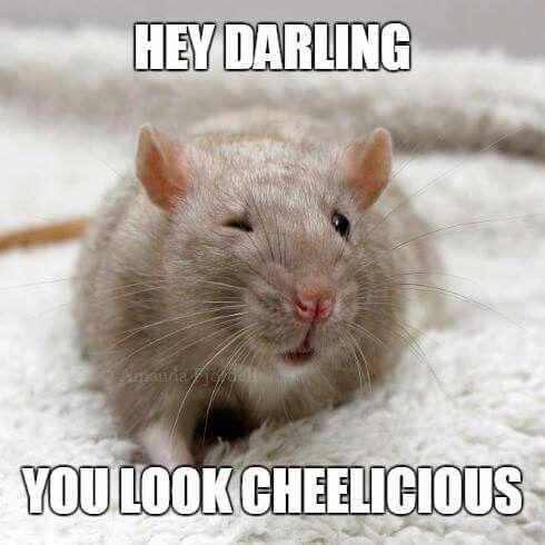 Hey Darling You Look Rat Meme