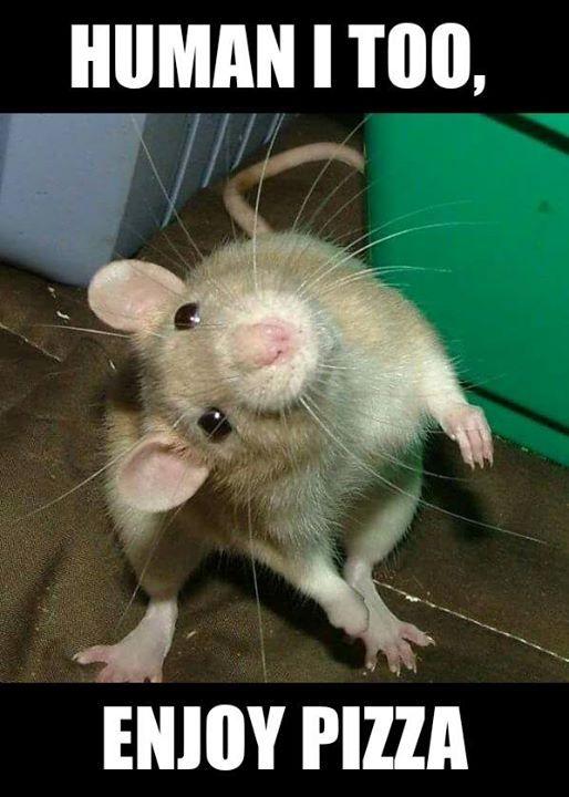 Human I Too Enjoy Rats Meme