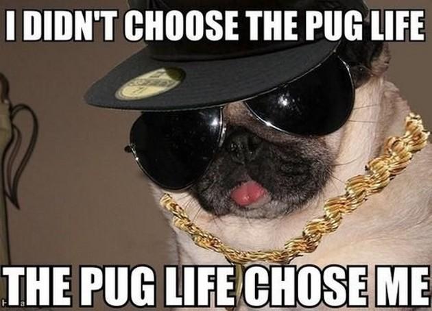 I Didn't Choose The Dogs Meme