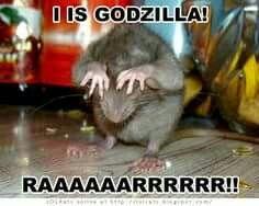 I Is Godzilla! RAAAAAARRRRRR!! Rats Meme