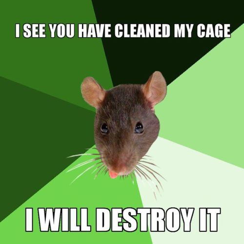 I See You Have Rats Meme