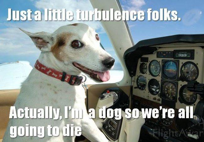 Just A Little Turbulence Dogs Meme
