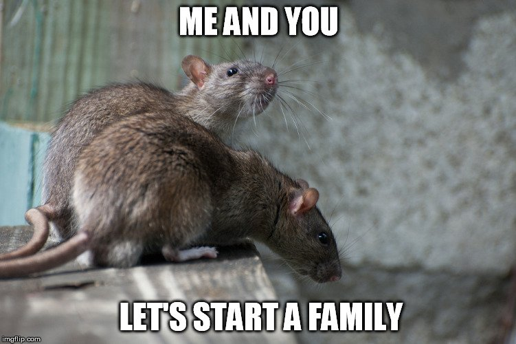 Me And You Let's Rats Meme