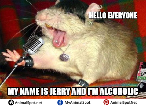 19 Amusing Mice Meme That Make You Laugh All Day   MemesBoy