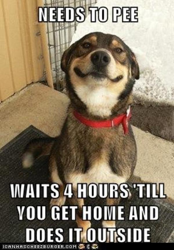 Needs To Pee Waits Dogs Meme