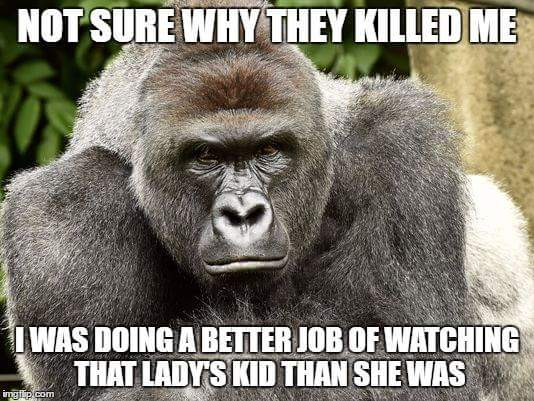 Not Sure Why They Gorilla Meme