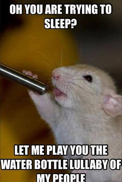 Oh You Are Trying Rats Meme