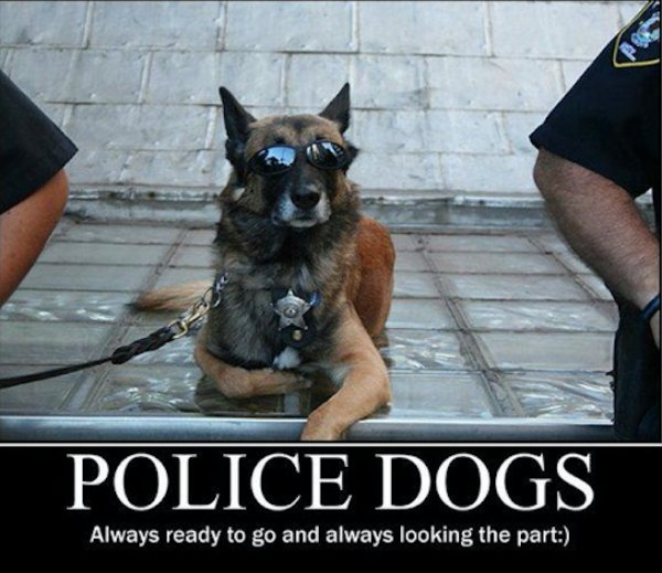 Police Dogs Always Ready Dogs Meme