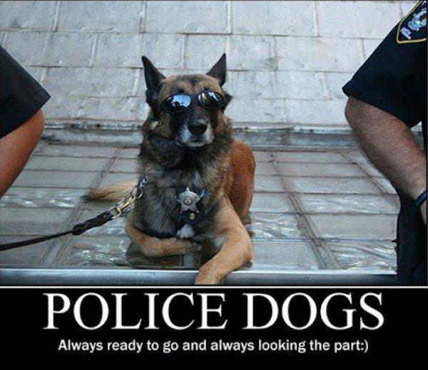 Police Dogs Always Ready Dogs Meme