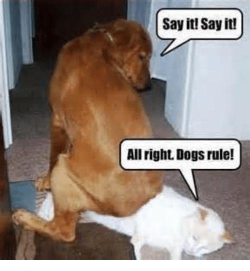 Say It Say It Dogs Meme