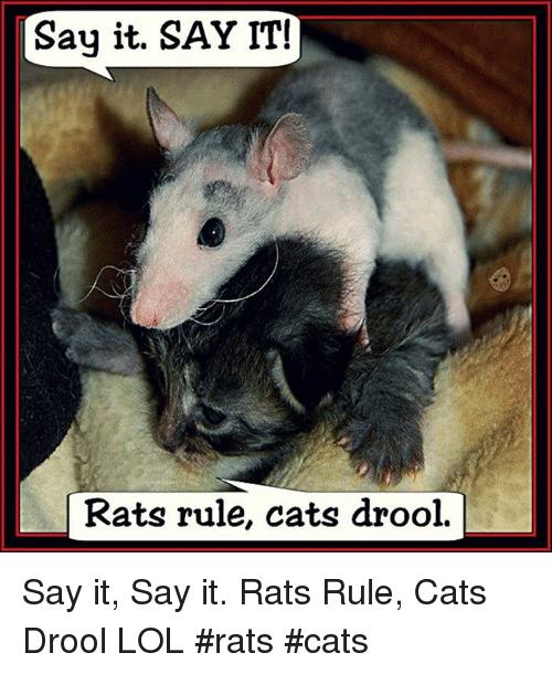 Say It Say It Rats Meme