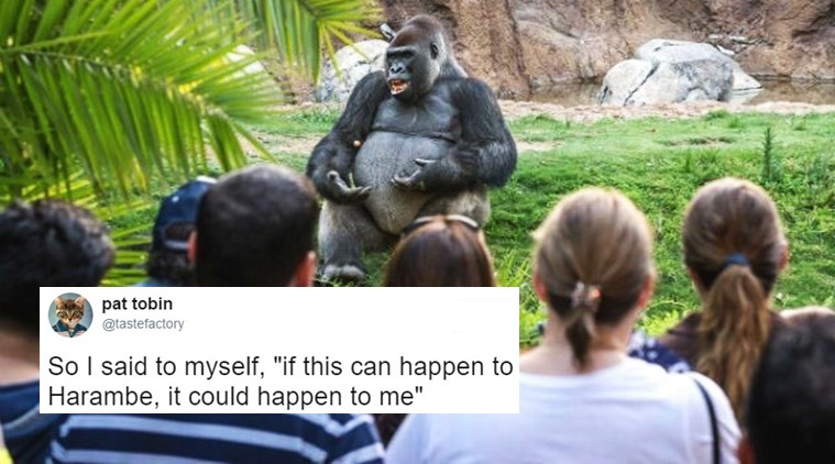 So I Said To Myself Gorilla Meme