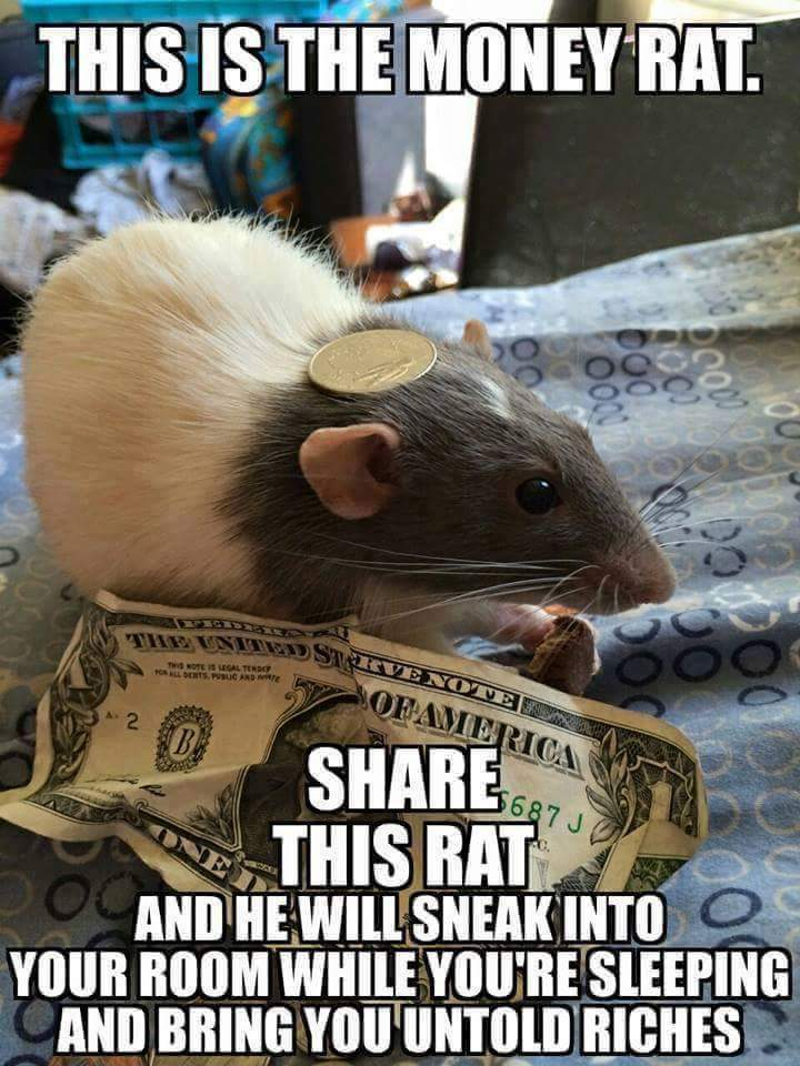 This Is The Money Rats Meme