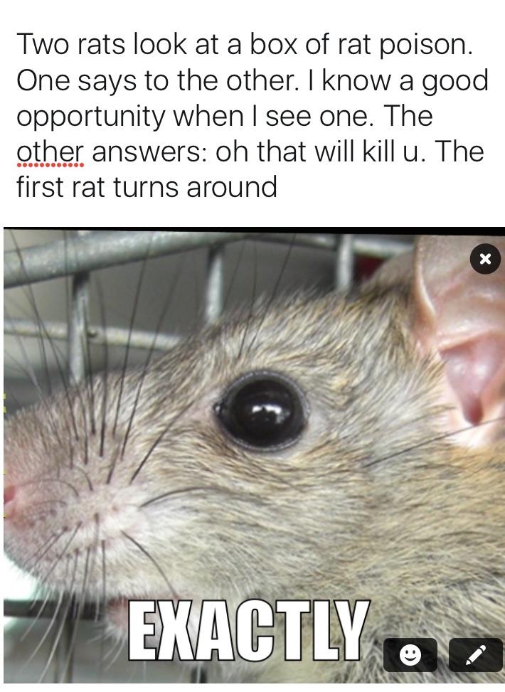 Two Rats Look At Rat Meme