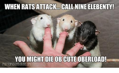 When Rats Attack Call Rats Meme