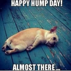 Happy Hump Day! Almost There.. Hump Day Meme