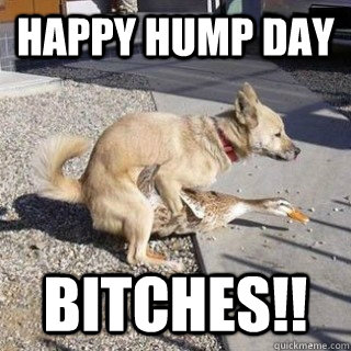 Happy Hump Day Bitches!! Hump Day Meme