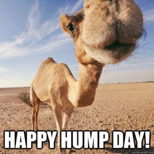 Happy Hump Day! Hump Day Meme