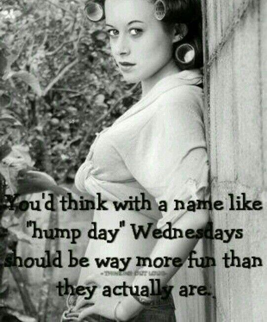 You'd Think With A Name Like Hump Day Wednesday Hump Day Meme