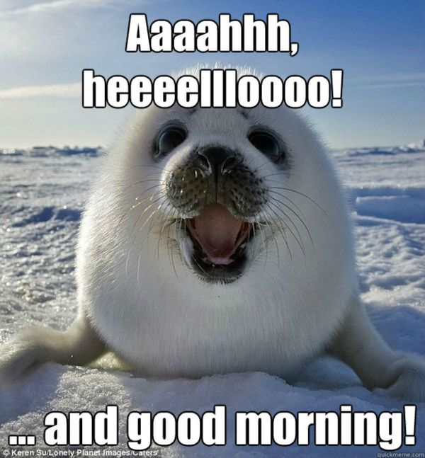 Aaaahhh, Heeeellloooo! Good Morning Meme