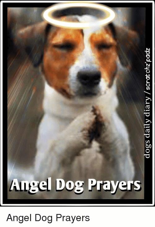 Angel Dog Prayers Angel Meme
