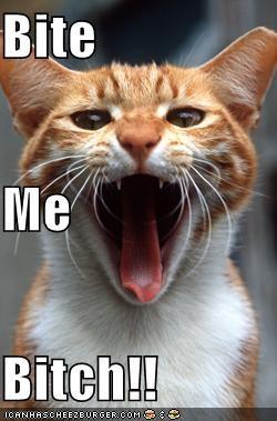 Bite Me Bitch!! Bite Me Meme