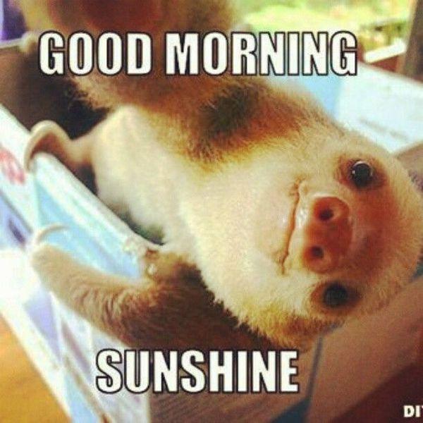 Good Morning Sunshine Good Morning Meme