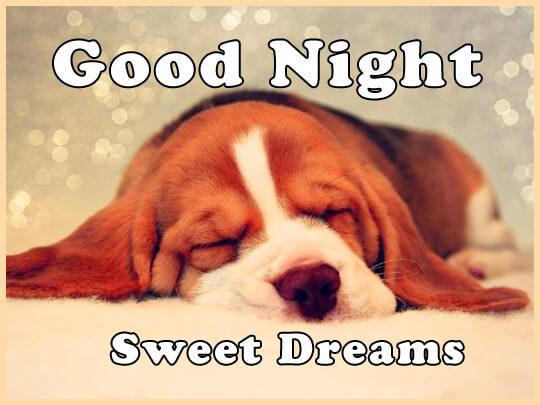 Good Night Sweet Dreams Good Night Meme