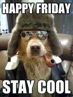 Happy Friday Stay Cool Good Week Meme