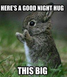Here's A Good Night Hug Good Night Meme