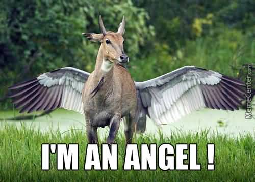 I'm An Angel! Angel Meme