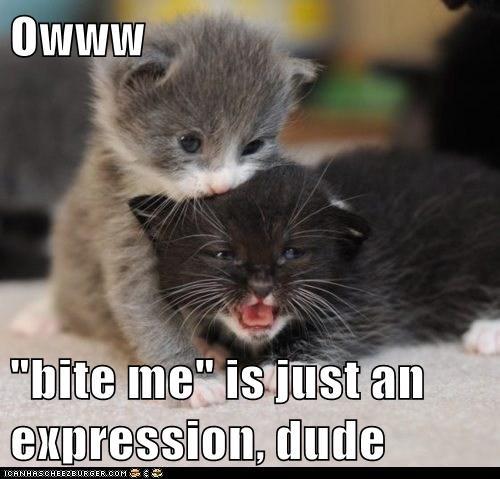 Owww Bite Me Is Bite Me Meme