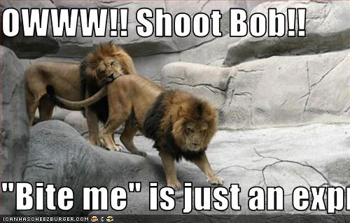 Owww!! Shoot Bob!! Bite Me Bite Me Meme