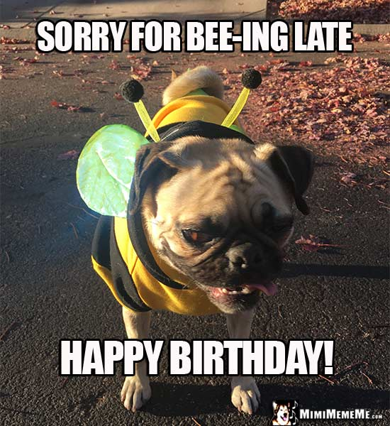 Sorry For Bee Ing Late Happy Belated Birthday Meme