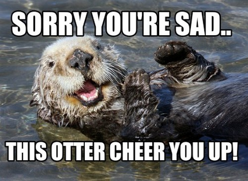 Sorry You're Sad This Cheer Up Meme
