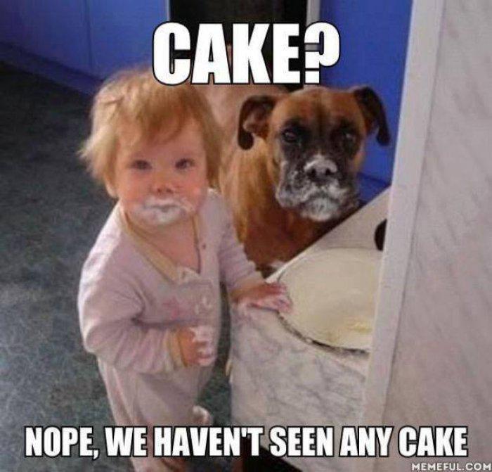 Nope We Haven't Seen Birthday Cake Meme