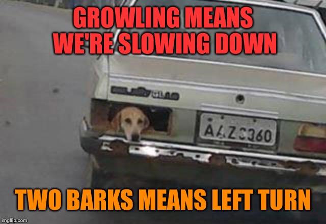 Growling Means We're Slowing Car Meme